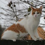 Fred the cat - missing from The Culvert
