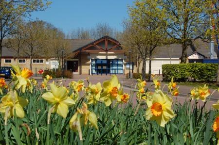 Daffodils: Bradley Stoke in Bloom