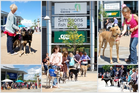 Collage of photos from the Bradley Stoke Fun Dog Show
