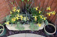 Garden trough and pots
