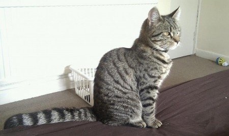 Cat missing from Ormonds Close, Bradley Stoke, Bristol.