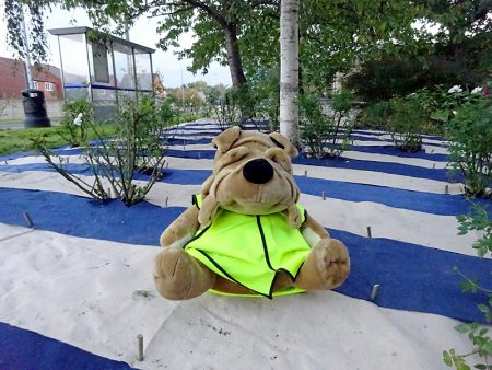Bradley Stoke in Bloom mascot Orlando sits on the 'candy strip' carpet laid to suppress weeds in a rose bed on Brook Way.