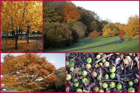 Autumn in The Stokes.