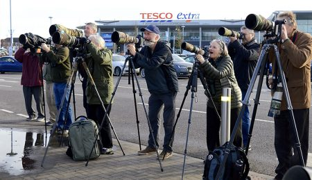 Birdwatchers taking photographs of waxwings in the car park of the Willow Brook Centre, Bradley Stoke, Bristol.