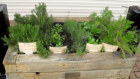 Photo of the herb garden at the doctors' surgery on Brook Way.