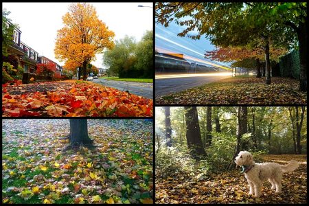 'Autumn in the Stokes' photo competition.