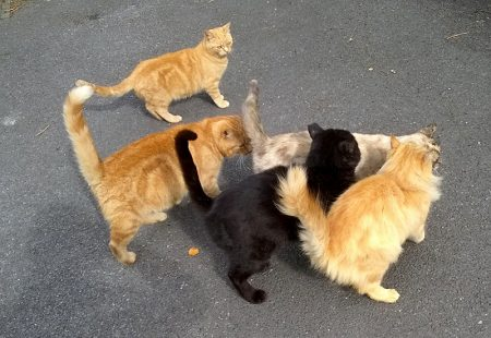 Photo of five cats milling around in a group.