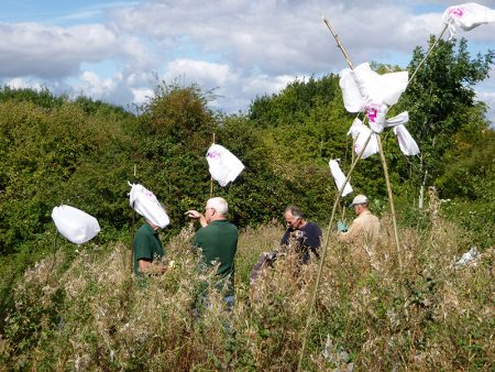 "Photo of ""flags"" marking the location of rowan saplings."