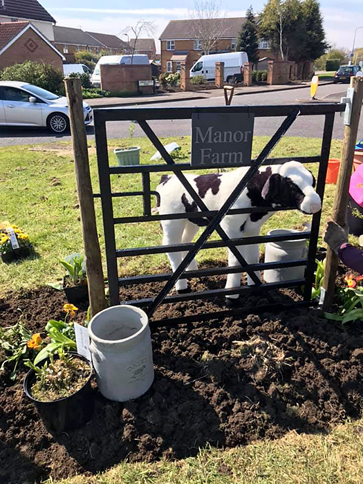 Photo of 'Debbie the heifer' standing behind a gate on Manor Farm Roundabout.