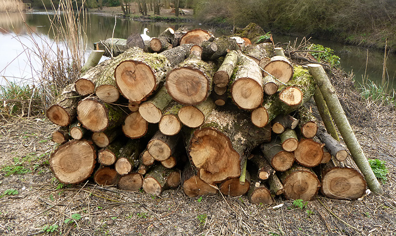 Photo of a log pile on the main island at the lake, looking towards the weir.