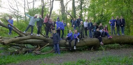 Scouts from the 1st Stoke Gifford Group standing on a large fallen tree during a bat walk.