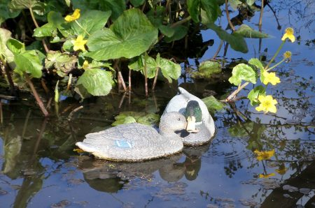 Photo of two decoy ducks on the pond at The Common East.