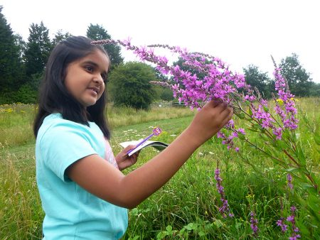 Photo of a girl examining a flower on the nature walk.