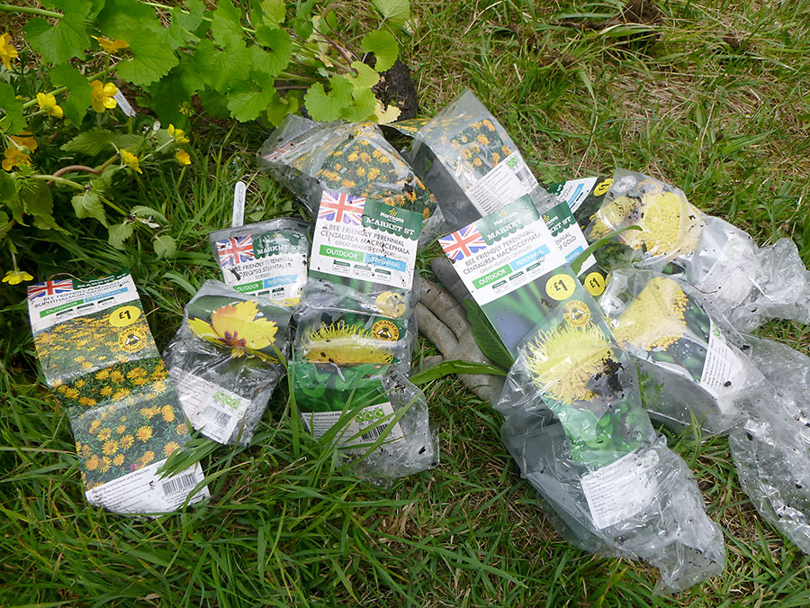 Photo of plants in plastic bags.