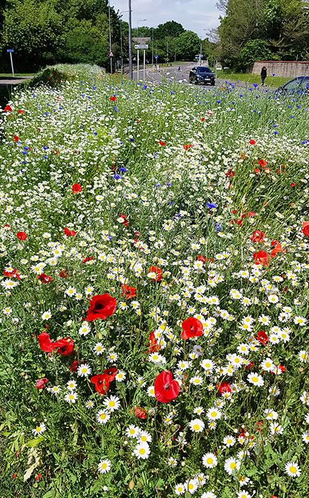 Photo of wildflowers growing alongside a road.